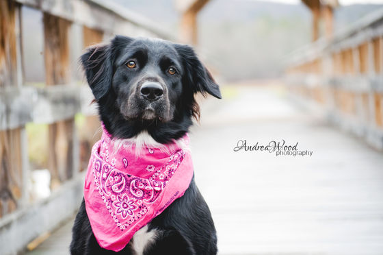 Photo 4 by Andrea Wood for Pet Photography