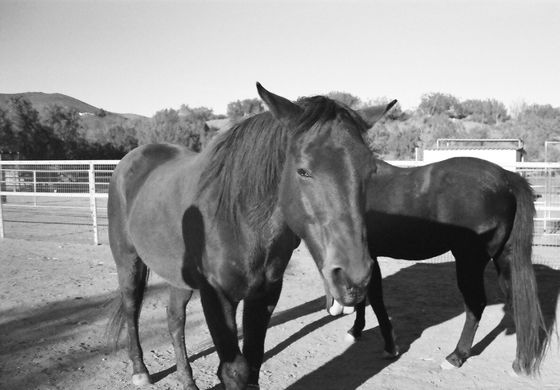 Farm Sanctuary 05 (Horses)