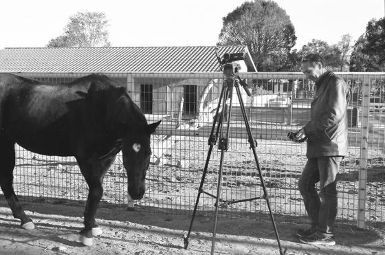Farm Sanctuary 07 (Horse/Film Crew)