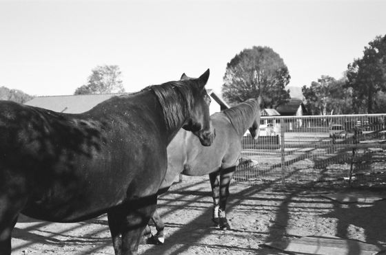 Farm Sanctuary 08 (Horses)